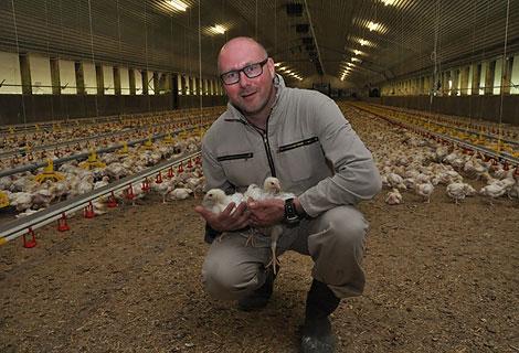 Hähnchenmast Initiative Tierwohl QS