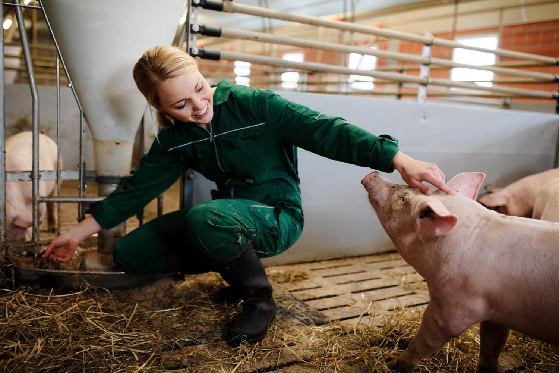 Gesa Lampe Schweinemast
