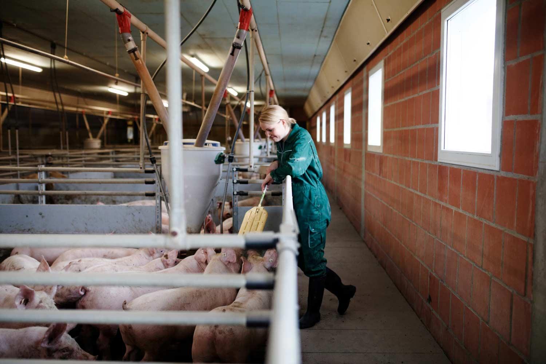 Gesa Lampe im Schweinestall