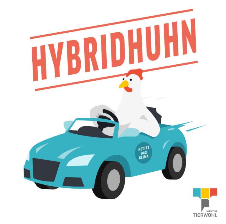 Hybridhuhn Tierwohllexikon