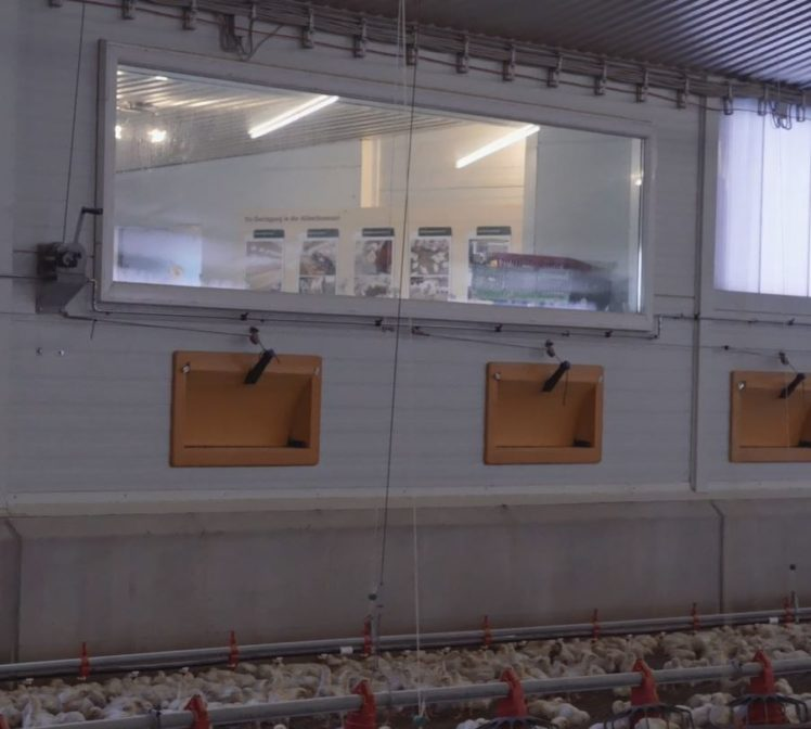 Der moderne Stall ist transparent: Hier können Besucher einen Blick in den modernen Hähnchenstall von Arnd von Hugo werfen.