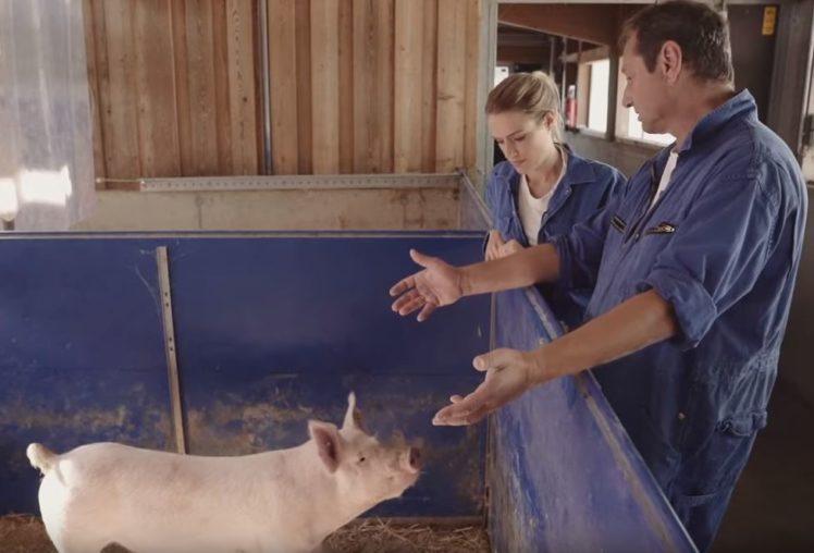 Land in Sicht Videosequenz: Vanessa Meisinger lässt sich von Hansjörg Schrade (Landesanstalt für Schweinzucht, Boxberg) zeigen, wie ein Stall mit ausreichend Abwechslung aussieht