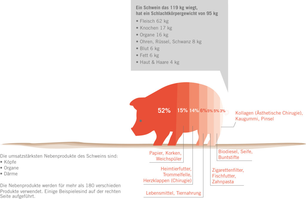 Infografik tierische Nebenprodukte Schwein