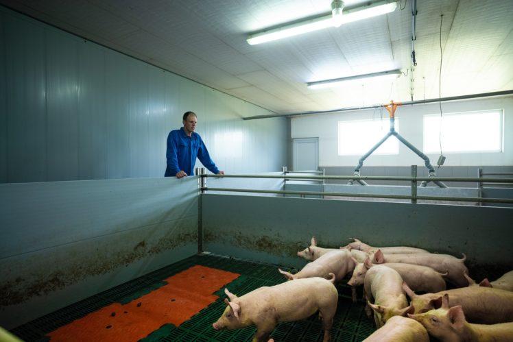 Tim Friedrichs beim Kontrollgang in der Schweinemast